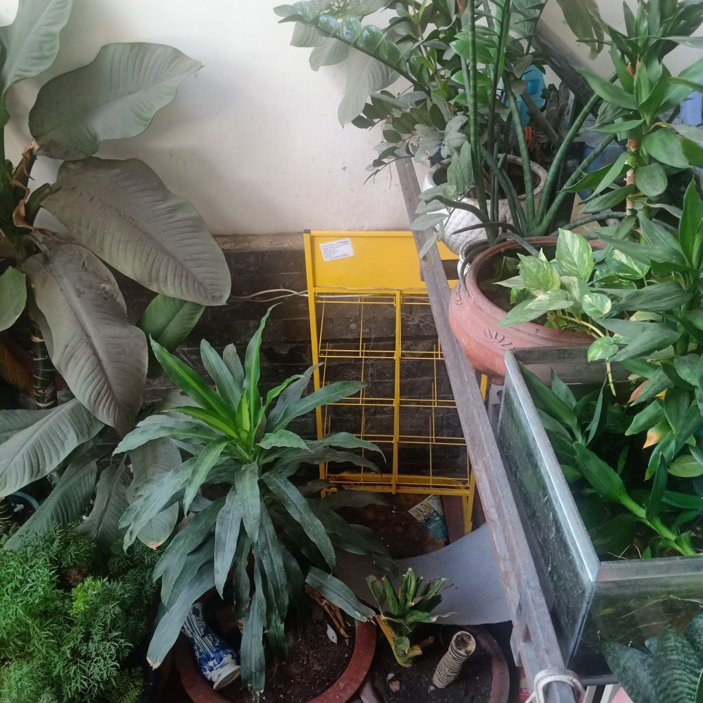 Cây xanh chỗ tiếp khách tại văn phòng hồ chí minh gần AEON tân Phú 1024x1024 - Giới thiệu